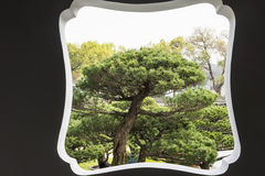 Bonsai and window in Duojing garden Royalty Free Stock Images