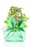Bonsai wrapped in paper gift Stock Image