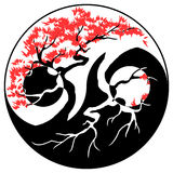 Bonsai Yin Yang Stock Photo