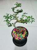 Bonsai z colourful kamieniami Zdjęcia Stock