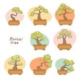 Bonsaibäume Stockbilder