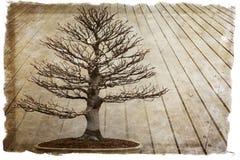 Bonsaibakgrund Arkivfoto