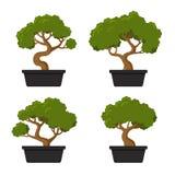 Bonsaibaum-Ikonensatz Lizenzfreies Stockfoto