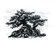 Bonsaibaum, zeichnend Stockfotografie