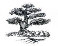 Bonsaibaum, zeichnend Stockfotos
