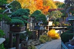 Bonsaibomen Stock Afbeeldingen