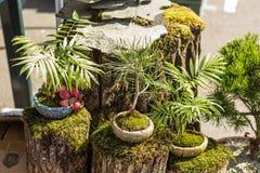Bonsaibomen op verkoop in de tuinmarkt royalty-vrije stock foto's