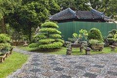 Bonsaibomen Singapore stock foto