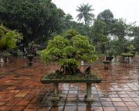 Bonsaiboom in de Pagode van Thien Mu in Tint, Vietnam royalty-vrije stock foto's