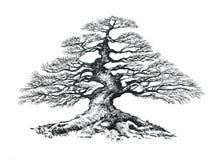 Bonsaiboom, die inkt trekken royalty-vrije illustratie