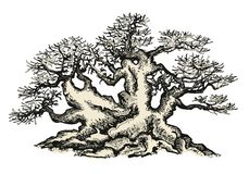 Bonsaiboom, die inkt trekken vector illustratie