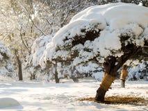 Bonsaiboom in het park van Tokyo in sneeuw wordt behandeld die stock afbeelding