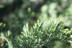Bonsaienslut upp fotoet Bl?tthav, Sky & moln Färgrik grön växt arkivfoton