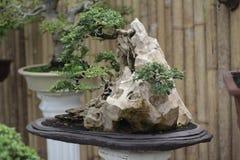 Bonsaigartenpflanzen lizenzfreie stockfotografie