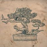 Bonsaihemväxt royaltyfri illustrationer
