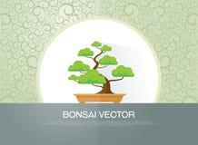 Bonsaiinstallatie Royalty-vrije Stock Fotografie