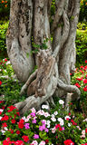 bonsaipark Royaltyfria Foton