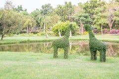 Bonsais, árvore do anão, dobrando-se como o girafa da forma Fotografia de Stock