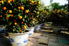 Bonsais anaranjados Imagen de archivo