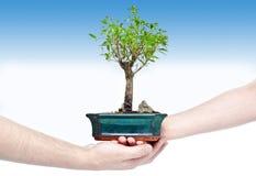 Bonsais-Baum Lizenzfreie Stockfotografie