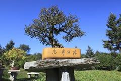 Bonsais chinos del jardín Foto de archivo