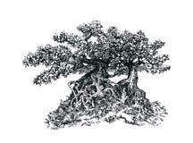 Bonsais con las ramas y las hojas Foto de archivo