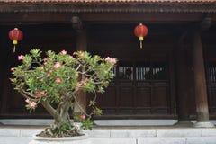 Bonsais de florescência fora do templo antigo fotografia de stock royalty free