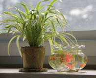Bonsais e aquário Fotografia de Stock Royalty Free