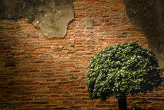 Bonsais e textura velha da parede Fotos de Stock Royalty Free