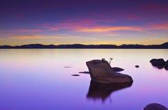 Bonsais-Felsen-Sonnenuntergang stockbild