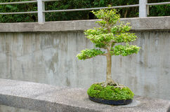 Bonsais im botanischen Garten stockfoto