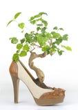 Bonsais im Schuh der Frau mit hölzerner Ferse Lizenzfreie Stockfotografie