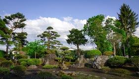 Bonsais no jardim japonês Fotos de Stock