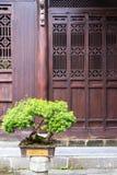 Bonsais und alte Tür Stockbilder