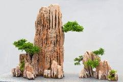 Bonsais y rocas. Foto de archivo
