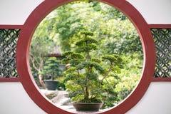 Bonsaiträd på ett rött runt fönster för traditionell kines i PA Arkivbild