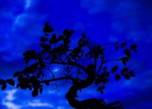 Bonsaiträd på natten Arkivfoto
