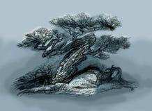 Bonsaiträd som drar Fotografering för Bildbyråer