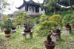 bonsaiträdgård Arkivbilder