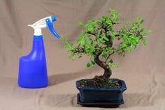 bonsaivatten Arkivfoton