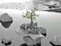 bonsay gräsplan och grå färger Royaltyfri Fotografi