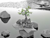bonsay Grünes und grau Lizenzfreie Stockfotografie