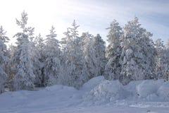 Bont-bomen en pijnbomen die door een sneeuw worden behandeld stock foto's
