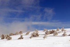 Bont-bomen onder sneeuw Royalty-vrije Stock Foto
