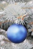 Bont-boom blauw Stock Foto