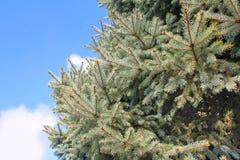 Bont-boom blauwe (zilveren) achtergrond stock fotografie