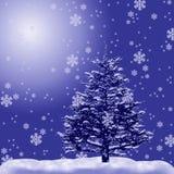Bont-boom in een sneeuw Stock Fotografie