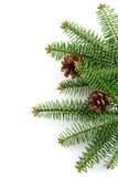 Bont-boom met kegel Stock Afbeelding