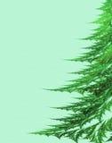 Bont-boom op een groene achtergrond Royalty-vrije Stock Foto