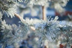 Bont-boom tak met ijs Stock Fotografie